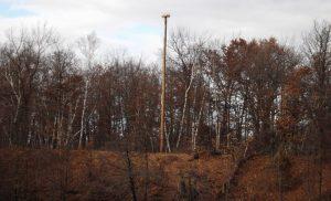 Osprey Nest Platform Relocate