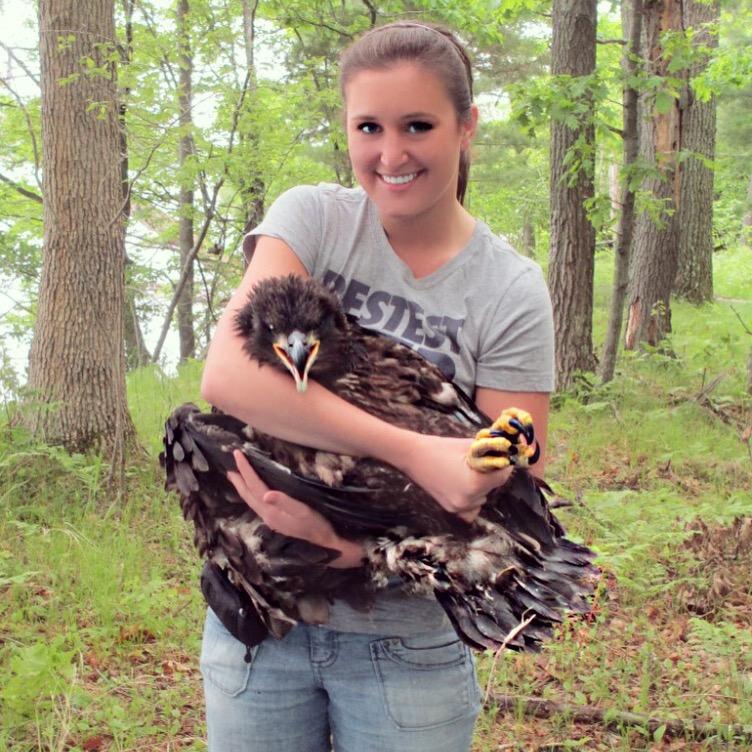 bald eagle population program volunteer
