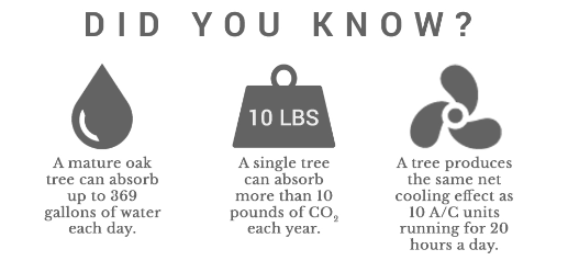 forest benefits did you know