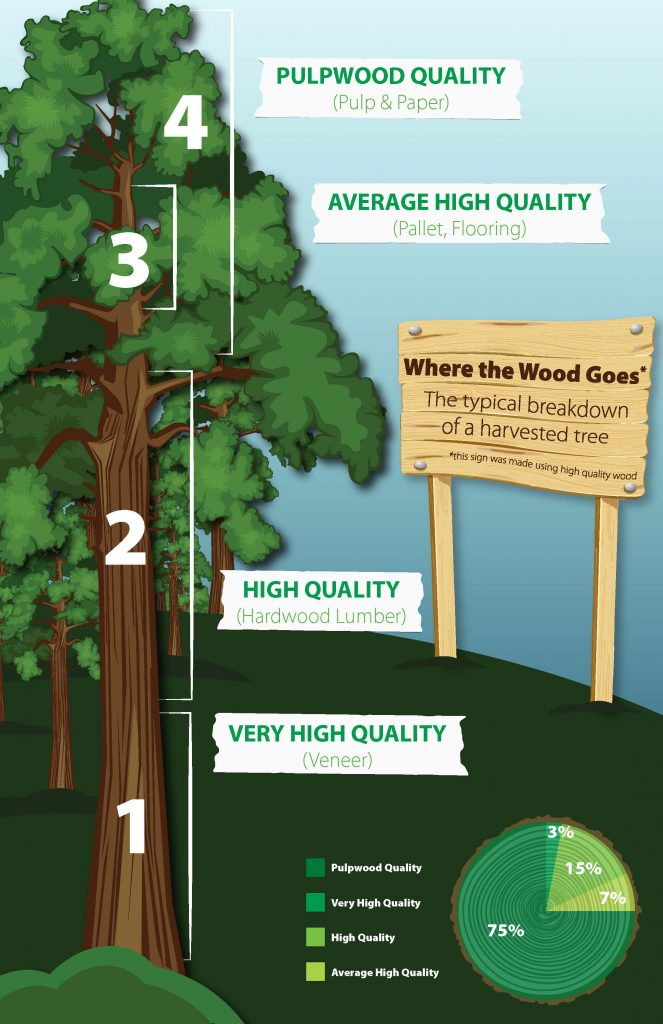 Using Every Part of the Tree responsible forestry practices infographic
