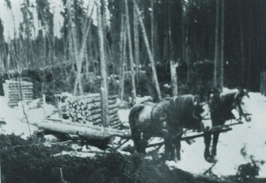 Domtar celebrates horse team and logging